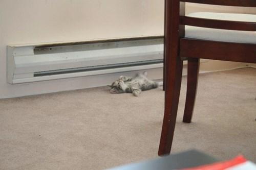 cute heater funny kitten - 8255289856