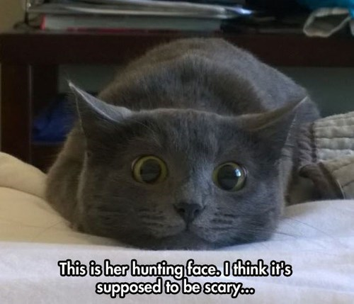 Cats hunting faces