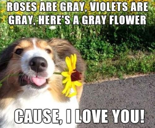 cute dogs love - 8255332608