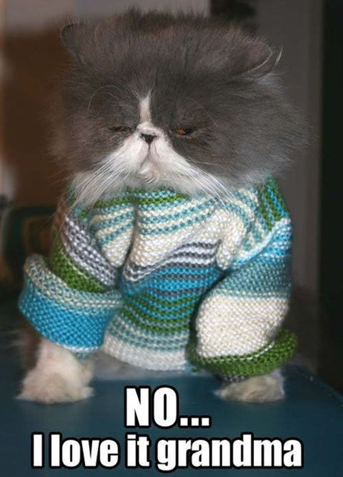 Cats,grandma,sweaters