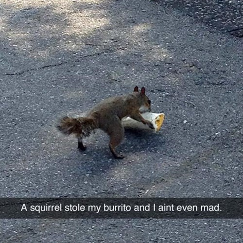 stealing squirrel funny