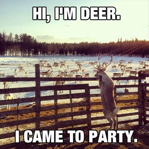 deer funny Party reindeer - 8255383808