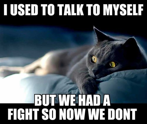 Cats crazy fight - 8255385600