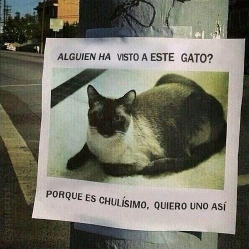fotos animales gatos curiosidades bromas - 8255387648