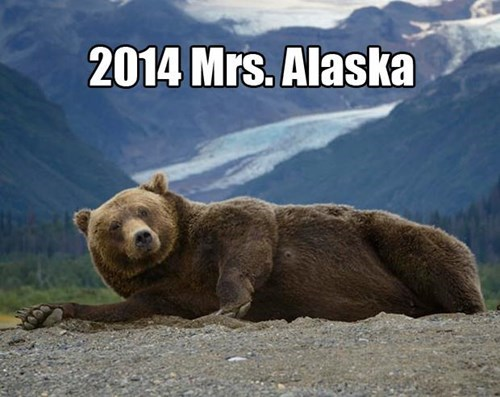 beauty pagent,alaska,bears,funny