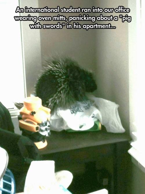 funny pig lost in translation porcupine - 8255411200
