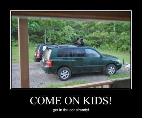 car,bear,funny,wtf