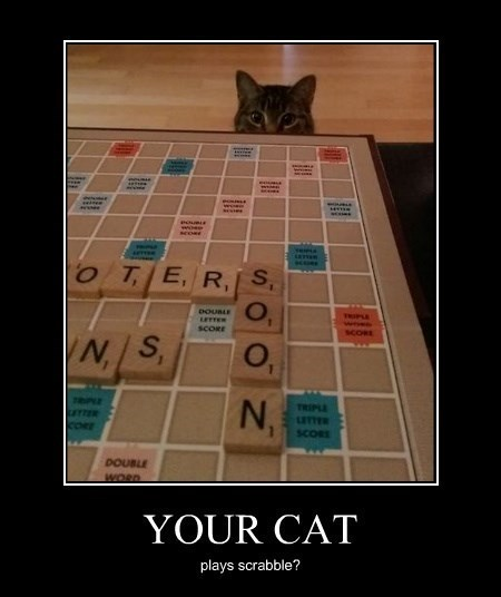 Cats funny scrabble - 8255417088