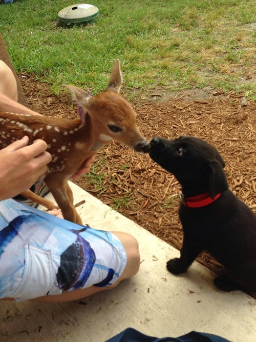 cute,deer,friends,fawns,puppies,squee