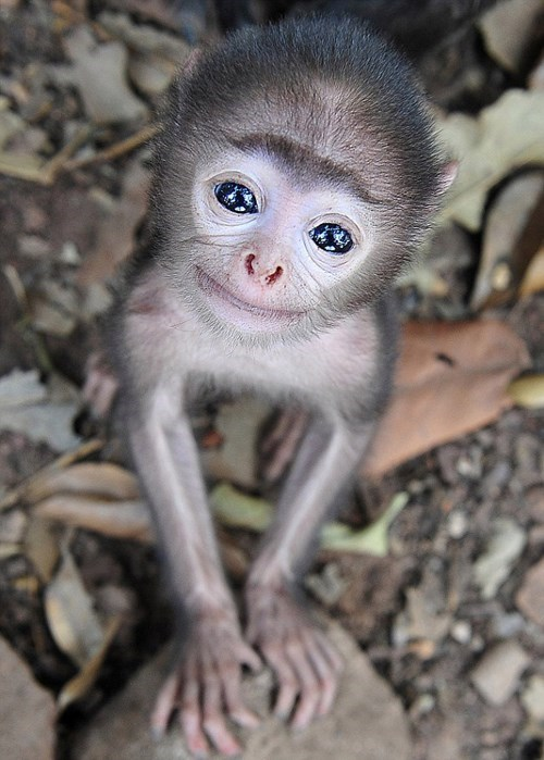 cute eyes monkeys - 8255450624