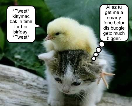 *Tweet* kittymac bak in time for her birfday! *Tweet* Ai az tu get me a smarty fone befor dis budgie getz much bigger.