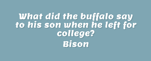 Text - What did the buffalo say to his son when he left for college? Bison