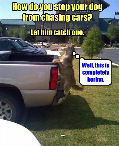 How do you stop your dog from chasing cars? Let him catch one. Well, this is completely boring.