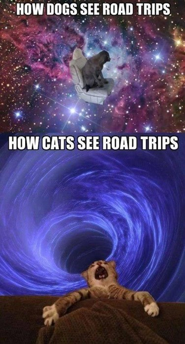 dogs road trips Cats