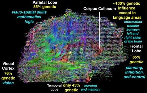 speed intelligence neurology brain science - 8255875584