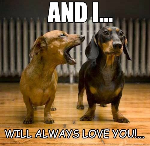 you,dogs,always,whitney houston,love,caption