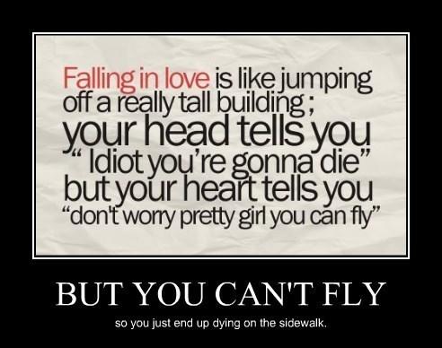 fly love idiots funny - 8256438016