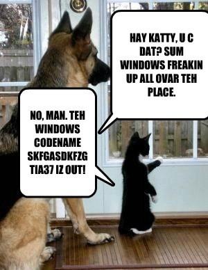HAY KATTY, U C DAT? SUM WINDOWS FREAKIN UP ALL OVAR TEH PLACE. NO, MAN. TEH WINDOWS CODENAME SKFGASDKFZGTIA37 IZ OUT!