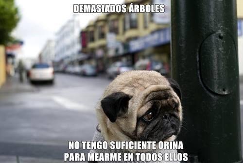 bromas perros Memes animales - 8256481792