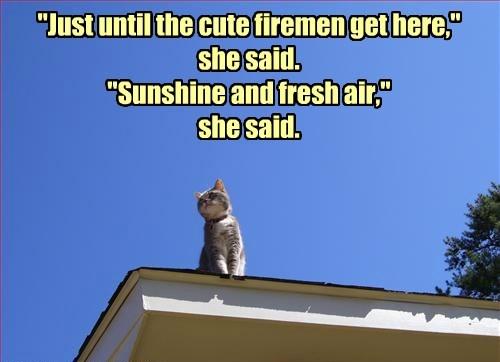 Cats,bait,fireman