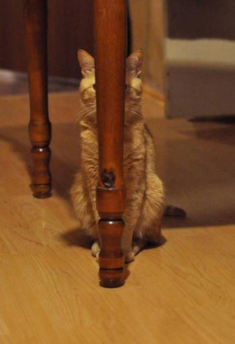 Cats cute hiding - 8256552192