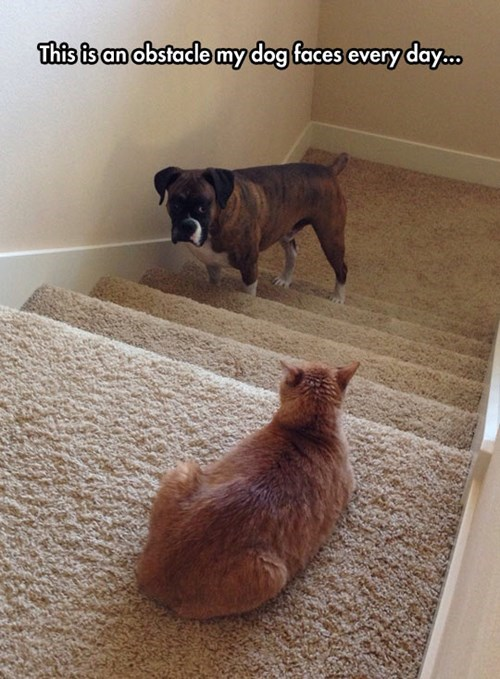 Cats,dogs,bully,stairs