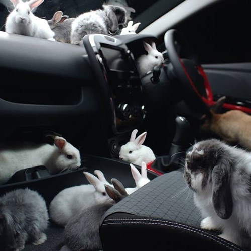 cars cute rabbits - 8256591360