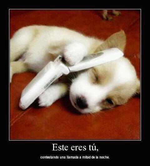 Memes animales perros bromas - 8256595200
