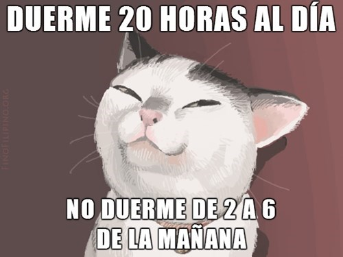 Memes animales bromas - 8256601344