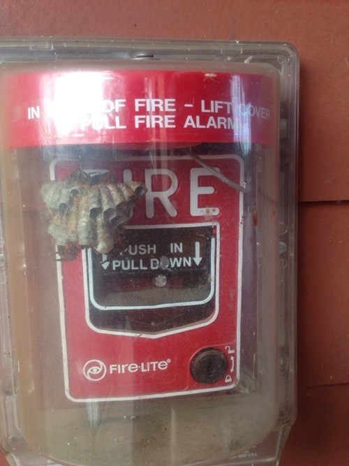 bees Kill It With Fire fire alarm g rated fail nation - 8256636160