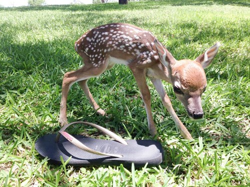 cute deer fawns tiny - 8256642304