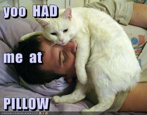 cute snuggle pillows you had me - 8256764160