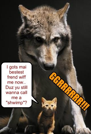 kitten wolfs - 8256815104
