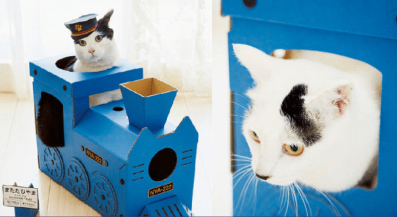 cute cat train
