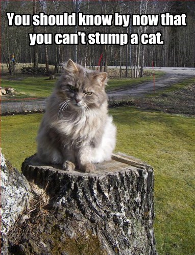 You should know by now that you can't stump a cat.