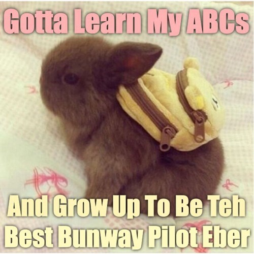 bunnies cute learning - 8257371136