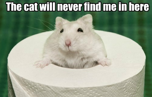 Cats,hamsters,hiding,toilet paper