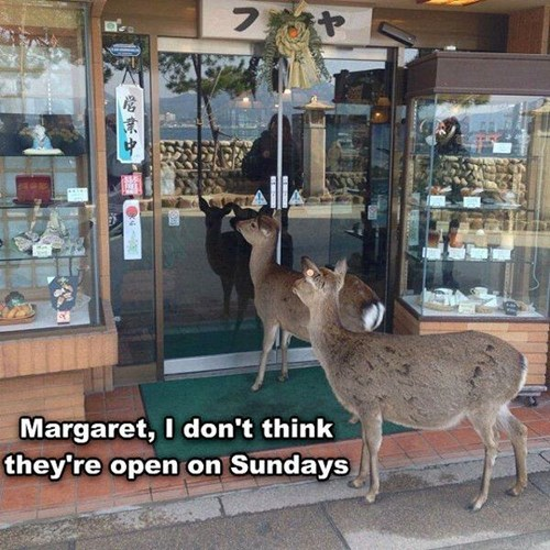 deer,funny,shopping,pastries