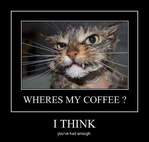 Cats coffee chill out funny - 8257520896
