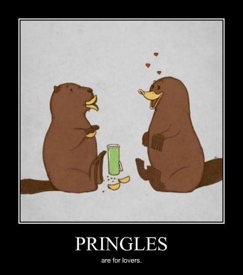 platypus funny pringles