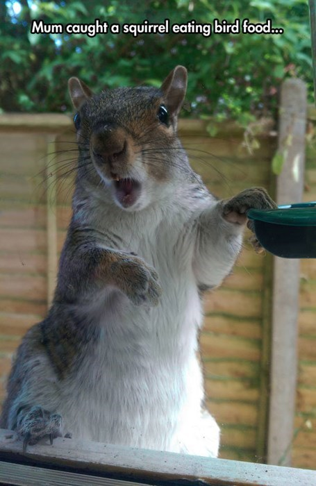 birds busted squirrel - 8257539584