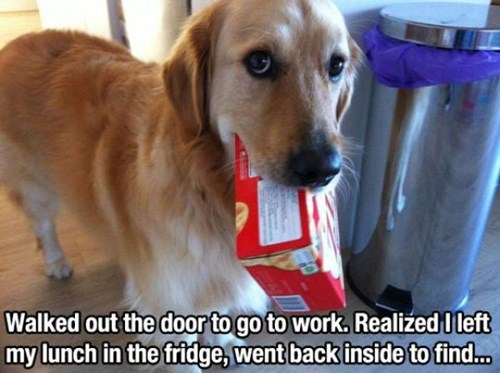 busted food dogs lunch funny - 8257541376
