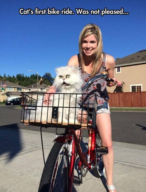 Cats bikes funny - 8257581056