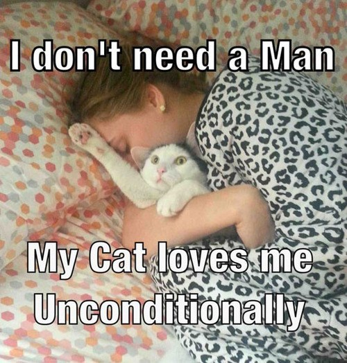 annoying Cats snuggle love - 8257594624