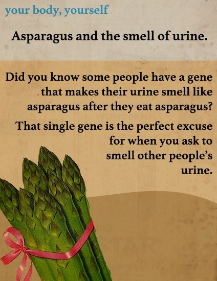 asparagus funny smell urine - 8257597184