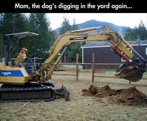 bones dogs digging - 8257613056