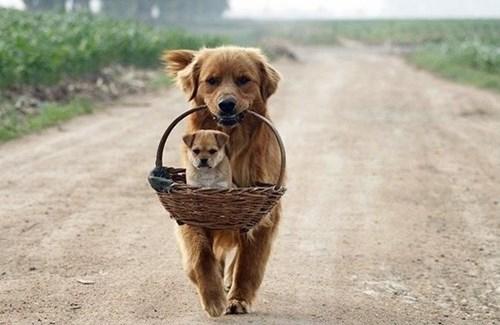 Babies cute puppies shopping - 8257630464