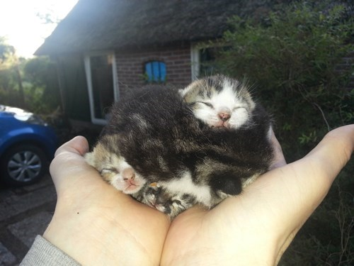 cute litter snuggle expert kitten