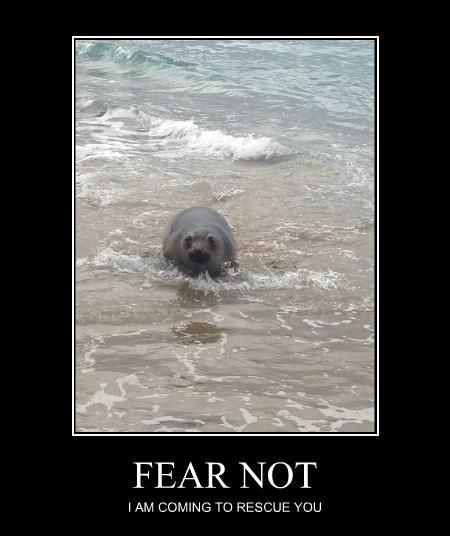 rescue funny seals - 8257814784