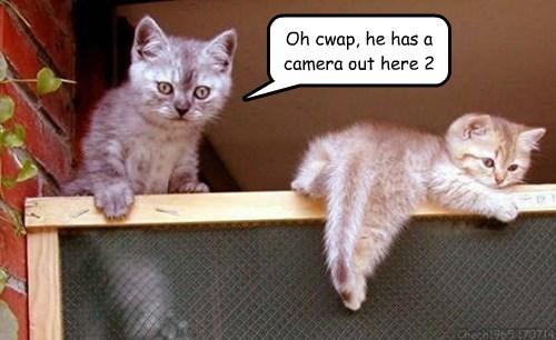 camera Cats kitten - 8258194176